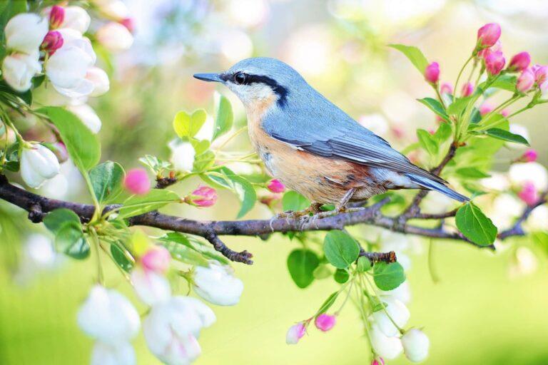 menirukan 7 jenis suara burung